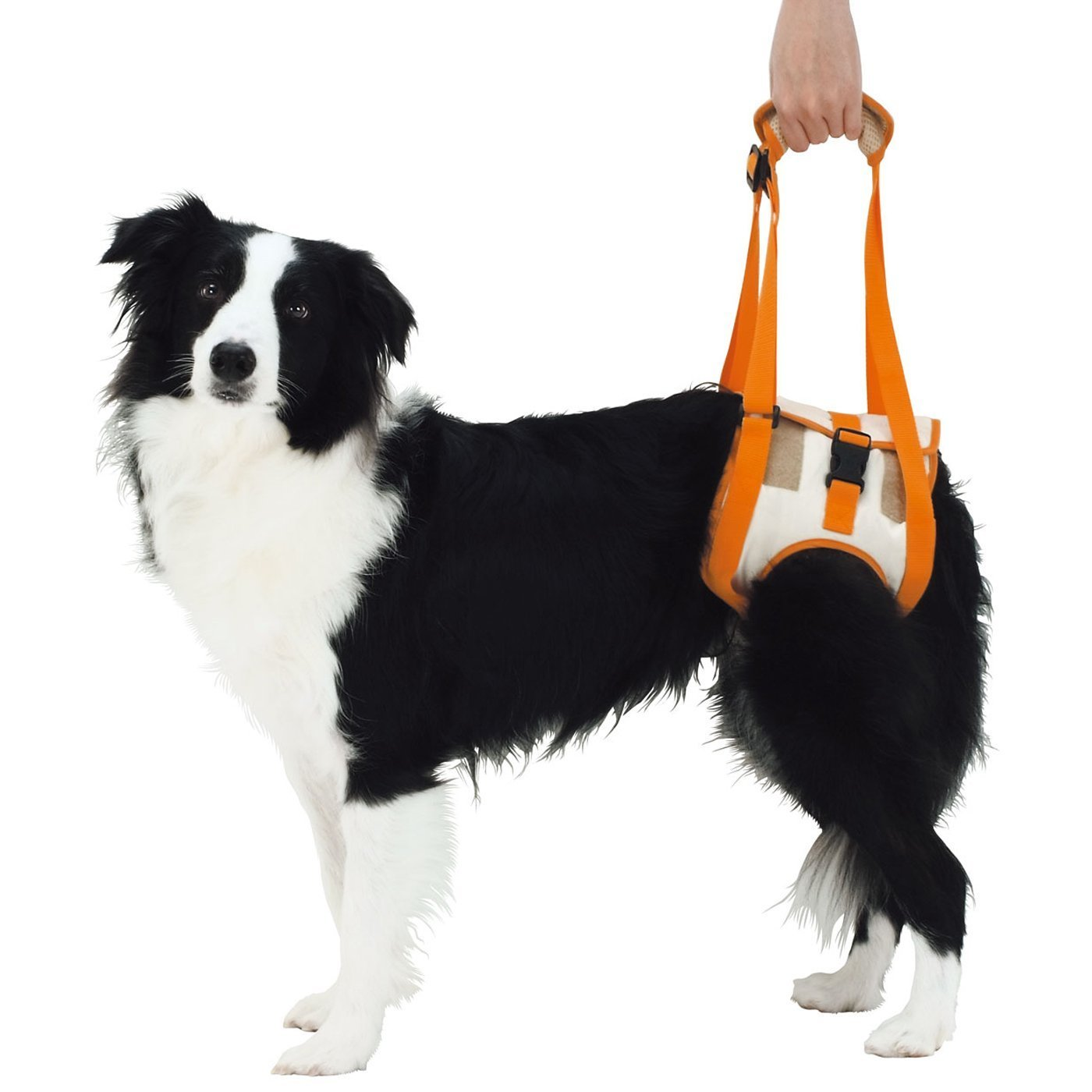 Rear Support Large Rear Support Large Alfie Pet Petoga Couture Kris Support & Rehabilitation Lifting Harness Style  Rear, Size  L