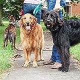 "Herm SPRENGER Ultra-Plus Prong Dog Training Collar, 3.2 mm x 23"", Steel Chrome Plated Dog Prong Collar, Pinch Collar for Dogs, Dog Correction Collar, Dog Prong Training Collar, Dog Supplies"