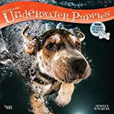 Underwater Puppies 2019 12 x 12 Inch Monthly Square Wall Calendar, Pet Humor Puppy