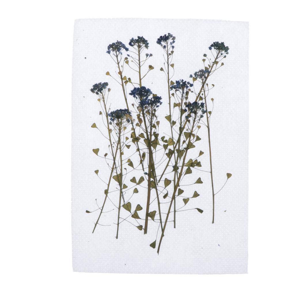 Chiwanji 6,7 12 fiori secchi pressati decorazioni per fai da te per realizzare candele 12 cm fiori per scrapbooking in resina