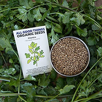 All Good Things Organic Seeds Cilantro Seeds (~225): Certified Organic, Non-GMO, Heirloom, Open Pollinated Seeds from the United States