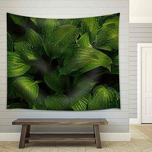 (wall26 - Green Leaves of Hosta with Rain Drops on Flower Bed in The Garden - Fabric Wall Tapestry Home Decor - 68x80)