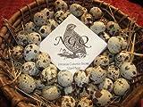 30 Fertile Cortunix Quail Hatching Eggs