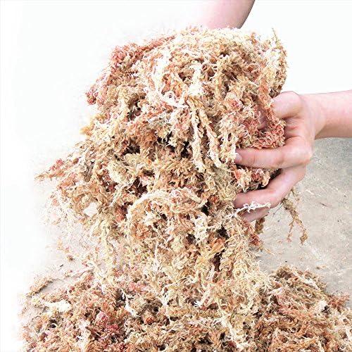 国華園 チリ産水苔 1kg 4袋1組(合計約4kg)