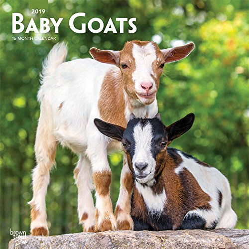 Baby Goats 2019 12 x 12 Inch Monthly Square Wall Calendar, Animals Domestic Baby Animals (Multilingual Edition)