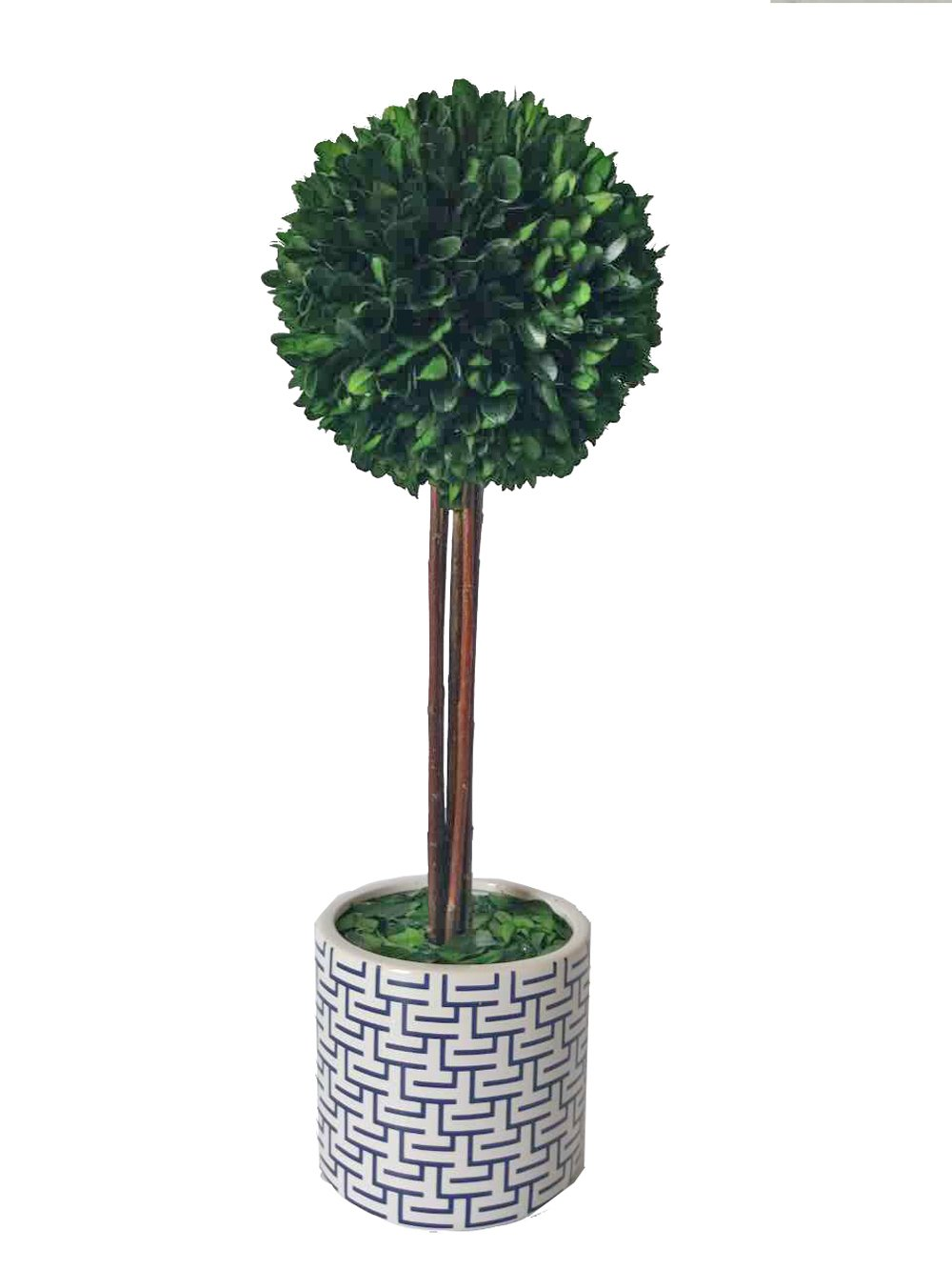 Galt International Ball Topiary Plant with Twig Stem in White and Navy Blue Ceramic Pot, 18-Inches Naturally Preserved Real Boxwood by Galt International