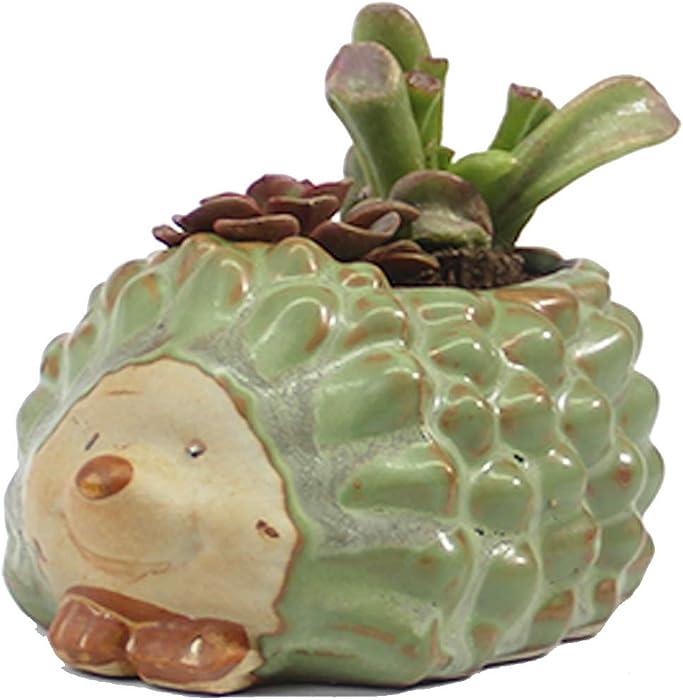 The Best Ceramic Garden Pots Succulent Planter