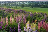 This original high-quality art print from Lantern Press boasts sharp detail and vivid imagery of Prince Edward Island - Field of Flowers (9x12 Art Print, Wall Decor Travel Poster). Printed on heavy stock paper using a high-end digital printing press ...