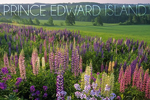 (Prince Edward Island - Field of Flowers (12x18 Fine Art Print, Home Wall Decor Artwork Poster))