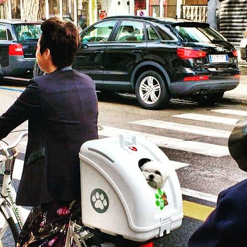Motorcycle POW Pet on Wheels Pet Carrier for Dogs and Cats Easy Mounting on Scooter Bike and also suitable for Car White