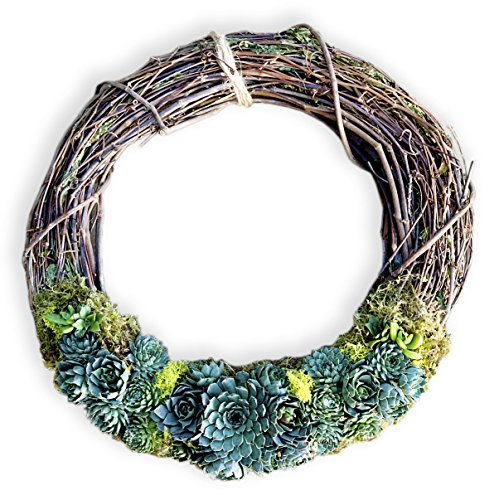 """Furrow & Vine – Fresh and Living Succulent Grapevine Wreath (14"""") – Handcrafted in the USA – Decorates any Door or Wall Inside or Outside by Furrow & Vine"""