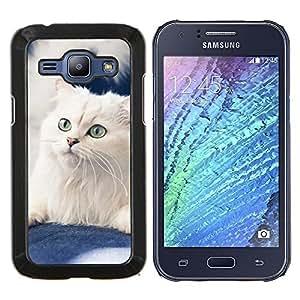 Blanca Curl Americano Gato noruego- Metal de aluminio y de plástico duro Caja del teléfono - Negro - Samsung Galaxy J1 / J100