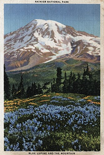 Rainier National Park, WA - View of Mt. Rainier, Blue Lupine Blooming (16x24 Giclee Gallery Print, Wall Decor Travel Poster) (Best Time For Wildflowers In Wa)