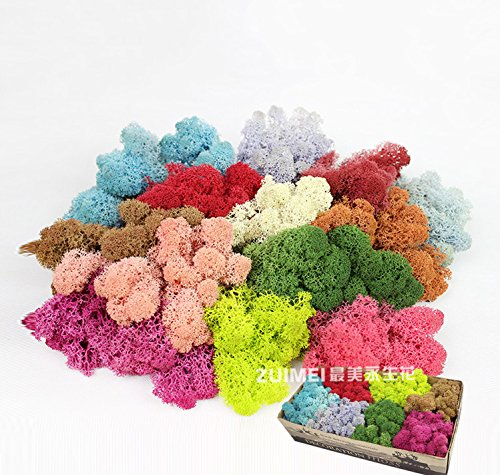 Lanyani Rainbow Preserved Reindeer Moss Dried Moss, Great for Art Crafts/Fairy Garden Packing/Home Decor and more,10g Each Color, 5 Colors Totaling weight 1.8oz