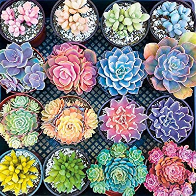 Puzzle 500 Piece Jigsaw Puzzle for Kids Adult Large Floor Puzzle Succulent Plants Unique Present Suitable for Teenagers and Adults Gift Home Decoration: Toys & Games