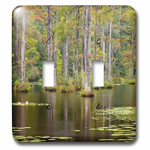 Danita Delimont - Swamp - USA, South Carolina, Cypress Gardens. Lily pads in cypress swamp. - Light Switch Covers - double toggle switch ()