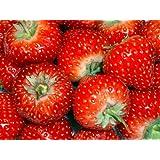 STRAWBERRY - TEMPTATION SEEDS - FRUIT GARDEN
