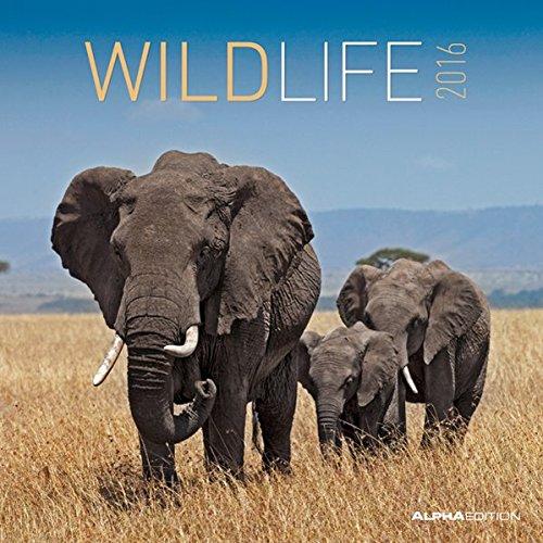 Wildlife 2016 - Broschürenkalender (30 x 60 geöffnet) - Tierkalender - Wandplaner