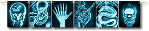 Forum Novelties Mad Scientist-Line of X-Rays 81060