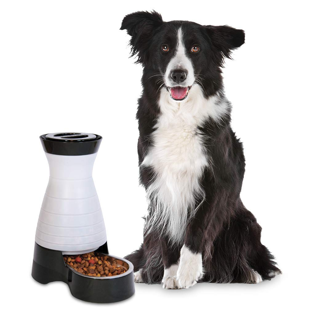 PetSafe Healthy Pet Gravity Dog and Cat Food Station, Stainless Steel Bowl, Holds 4 lbs of Dry Dog or Cat Food, Medium by PetSafe