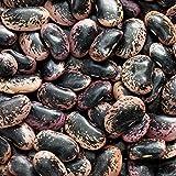 Outsidepride Scarlet Runner Beans Vine Plant Seed - 25 Seeds