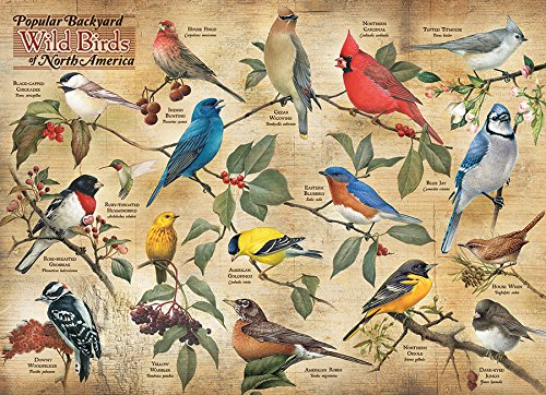 Types Of Backyard Birds (Cobble Hill Popular Backyard Wild Birds of N.A.)