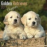 Golden Retriever Puppies Calendar 2017 - Dog Breed Calendars - 2016 - 2017 wall calendars - 16 Month by Avonside