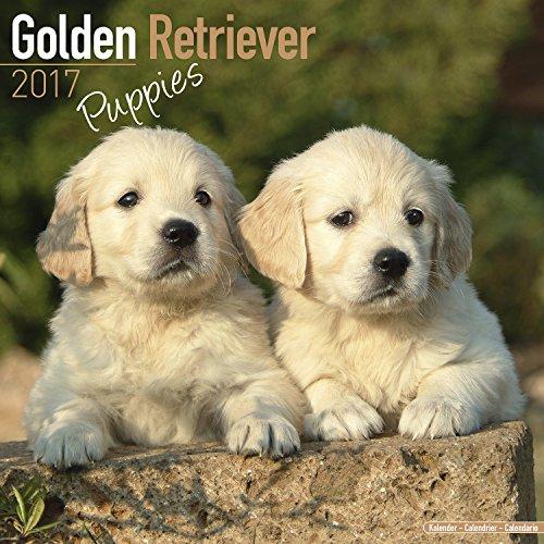 Golden Retriever Puppies Calendar 2017 - Dog Breed Calendar - Wall Calendar 2016-2017