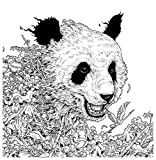 Imagimorphia: An Extreme Coloring and Search Challenge
