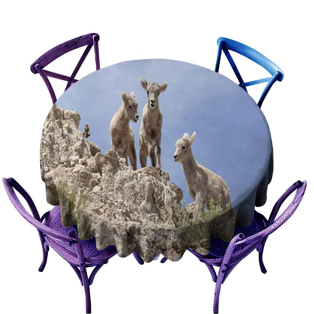 color08 70\ AndyTours Spill-Proof Table Cover,Bighorn Sheep Lambs Badlands National Park South Dakota,High-end Durable Creative Home,70 INCH