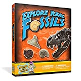Discover with Dr. Cool Starter Fossil Science Kit – 10 Genuine Fossils Including Dinosaur Specimens!