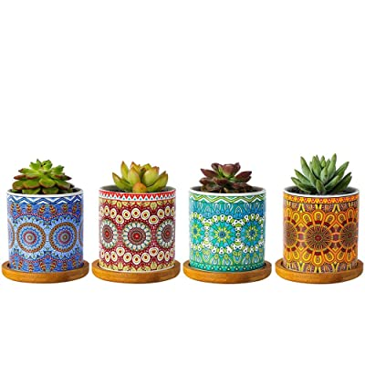 "winemana Mandala Style Succulent Plant Pots, 3"" Modern Cylinder Colorful Ceramic Planter for Cactus with Drainage Hole and Bamboo Trays, Set of 4 : Garden & Outdoor"