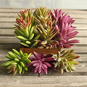Supla 9 Pcs faux succulents unpotted Vinyl Artificial Succulent Galanthus Cactus Plants Artificial Plants 3 Colors fake succulents Flower Arrangement Craft Making 24