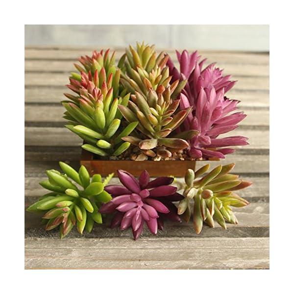 Supla-9-Pcs-faux-succulents-unpotted-Vinyl-Artificial-Succulent-Galanthus-Cactus-Plants-Artificial-Plants-3-Colors-fake-succulents-Flower-Arrangement-Craft-Making
