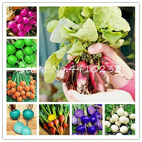- Pinkdose Bonsai 200 Pcs Rainbow Cherry Belle Radish Bonsai Organic Vegetables Strong Adaptability, Rich Nutrition, Green Food Plant: Mix