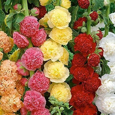 20Pcs Red Hibiscus Rose Flower Rare Seeds Flower Home Garden Decor Super