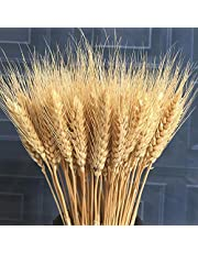 100 Pcs Natural Dried Wheat Flowers Wheat Stalks Bunches for Wedding Home Decor (43cm)
