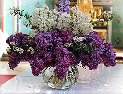bc0e33118c39 Image Unavailable. Image not available for. Color  Home Comforts Laminated  Poster Bloom Blossom Lilac ...