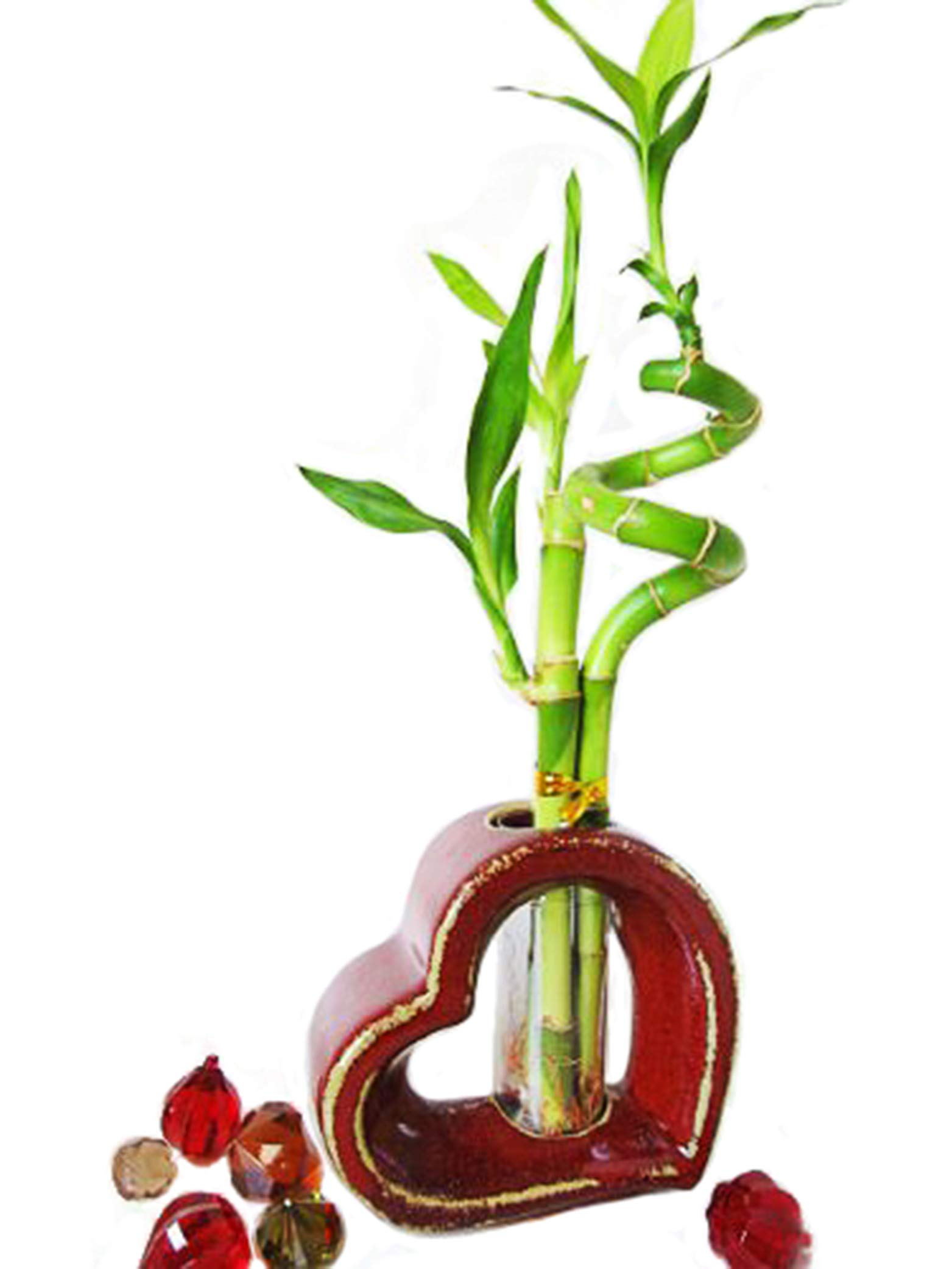 9GreenBox - Lucky Bamboo - Spiral Style with Hollow Heart Shaped Ceramic Vase