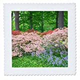 3dRose Danita Delimont - Forests - Azalea Woods in spring, Winterthur, Delaware, Usa - 20x20 inch quilt square (qs_278841_8)
