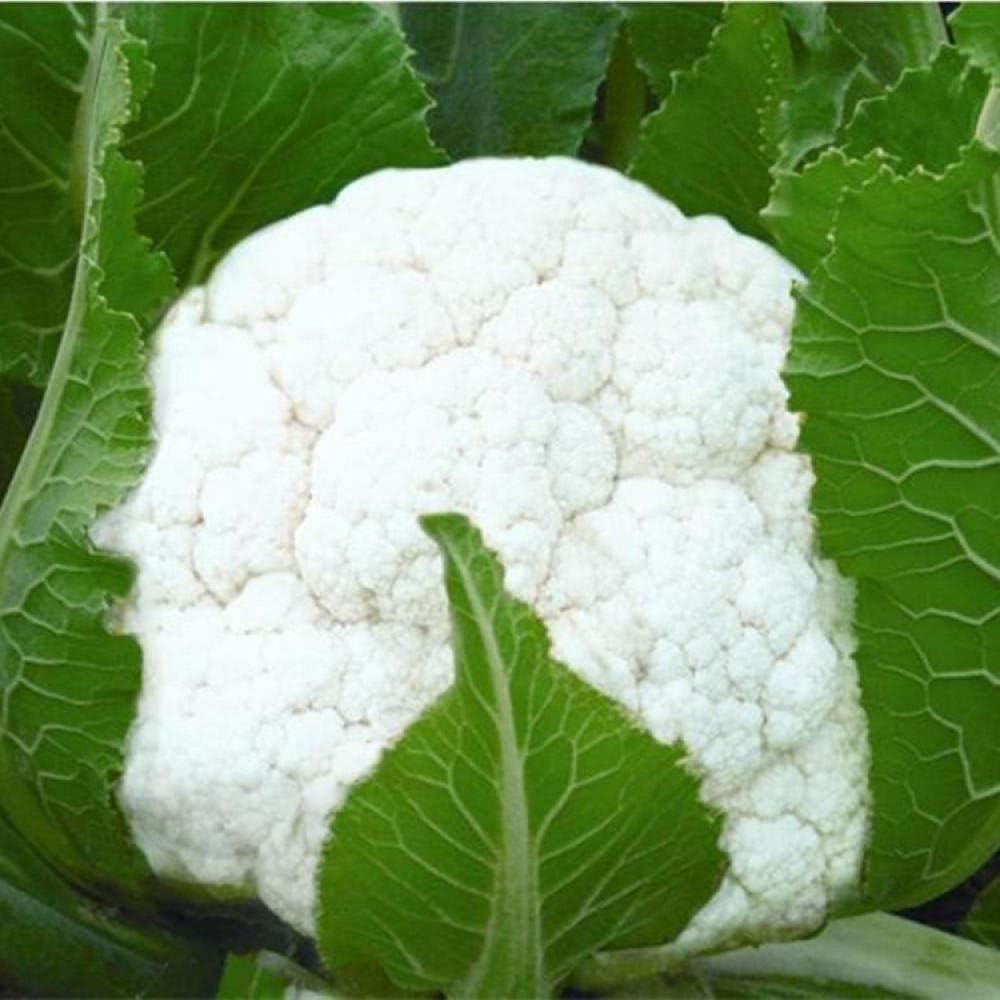 Semillas de flor de col de cedro atrapan la pelota, semillas de coliflor blanca, resistencia a enfermedades, alto rendimiento, cultivo de campo nutritivo y delicioso 300g