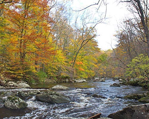 (Woodland Stream in Autumn - Fall Photography-