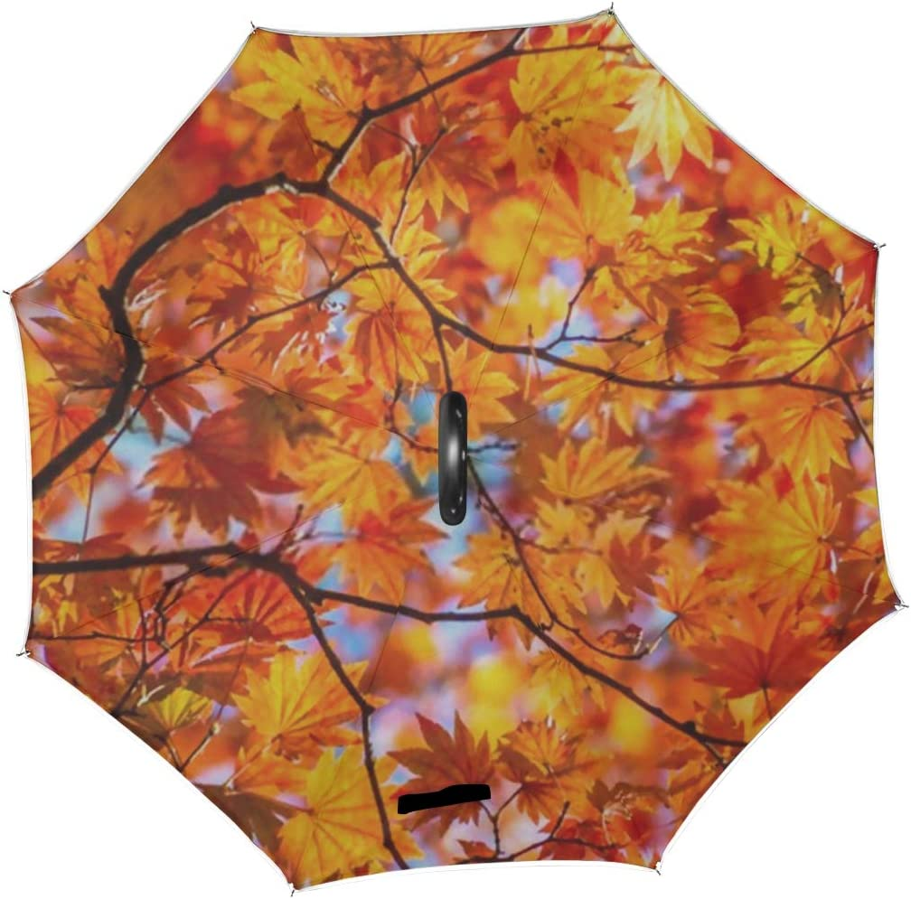 Double Layer Inverted Inverted Umbrella Is Light And Sturdy Abstract Nature Background Autumn Color Maple Reverse Umbrella And Windproof Umbrella Edg