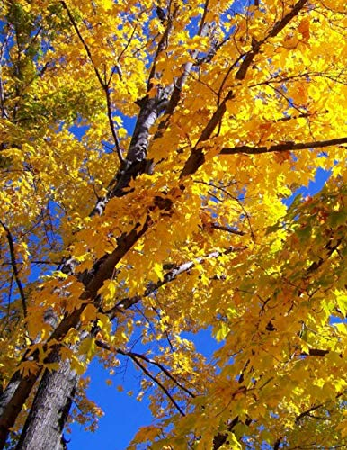 Notebook: Autumn Fall Leaves Maple Tree Yellow Season Harvest Solstice Red Brown ()