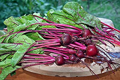 Stonysoil Seed Company Early Wonder Beet Heirloom Seeds..Best variety for beet greens
