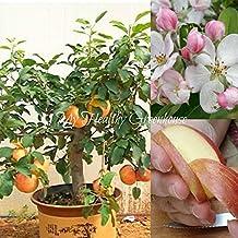 "SEEDS - Self-fertile Dwarf Gala Apple Tree ""Malus domestica"" Easy Grow! SHIPS FROM CANADA!"