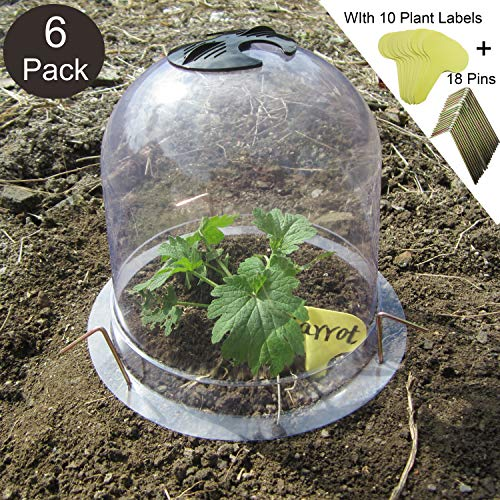 SYITCUN Protective Garden Cloche Reusable Plastic 6 Pack Plant Bell Cover Plant Protector Cover for Season extention with Ground Securing Pegs (8″ Diam. x 7″ Height)