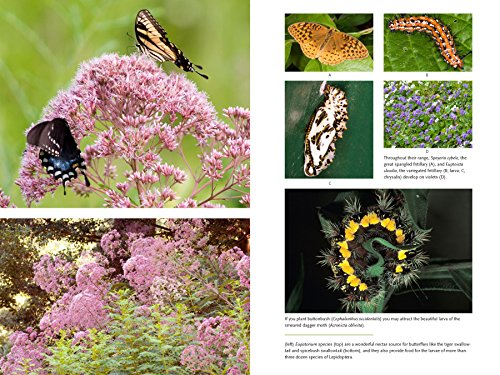 Bringing Nature Home: How You Can Sustain Wildlife with Native Plants, Updated and Expanded by Timber Press (Image #6)