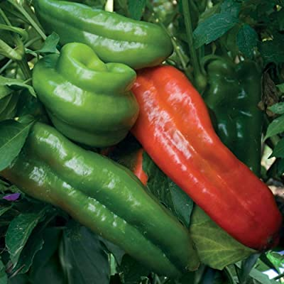 25 Sweet Marconi Rosso Pepper Seeds, Italian Pepper, Non-GMO : Garden & Outdoor