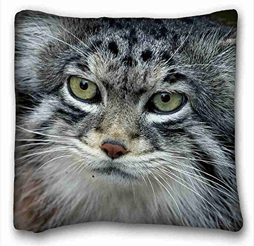 Pallas Cat (Generic Personalized ( Animals manul Pallas cat predator ) DIY Pillow Cover Size 16